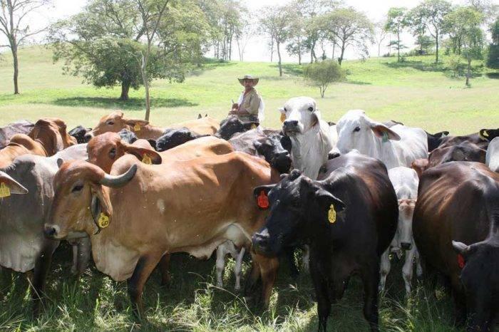 Obligan a ganaderos de Barinas a vender 10% del ganado