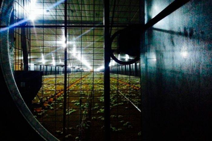 Avicultores de Táchira se declaran en quiebra por falta de insumos