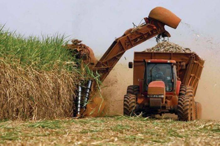 Procesamiento de caña de azúcar y escasez de gasoil