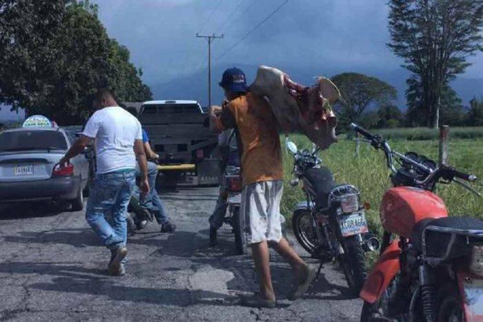 Un grupo de personas saqueó una hacienda y mató reses en Mérida (Video)