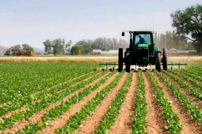 """Fedeagro afirma que se perderá el año agrícola 2019 por """"inacción"""" del Gobierno"""