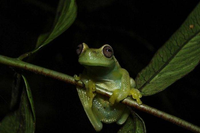 Científicos descubren nueva especie de rana en la sierra de Perijá