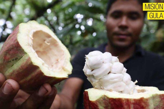 La guerra del cacao, por Miro Popic