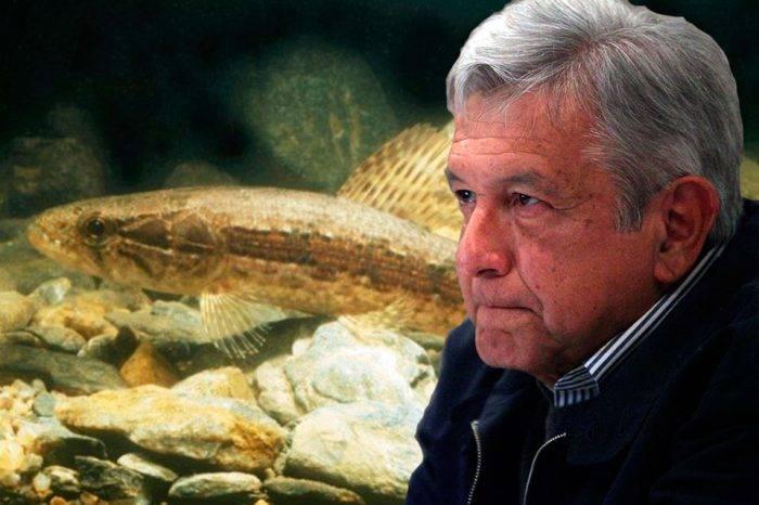 López Obrador y la guabina. Montaje GV