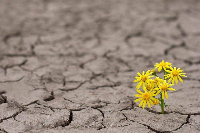 Jazmín Sambrano: La resiliencia nos salvará