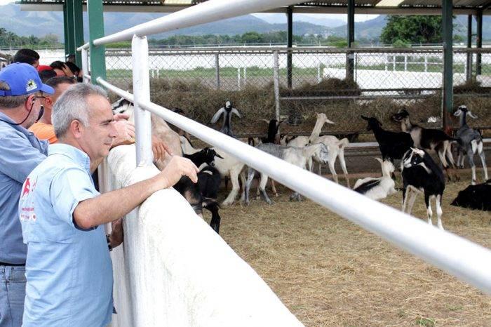 De conejos, cabras y estadistas, por Marco Negrón