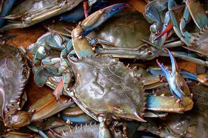 Trinidad y Tobago prohíbe la importación de cangrejos de Venezuela