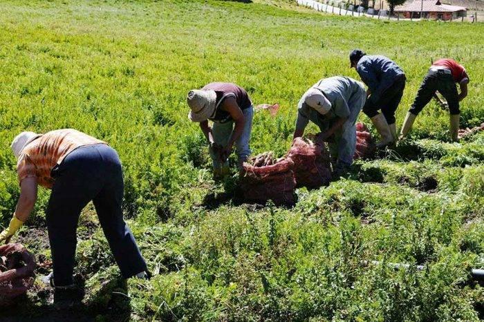 En Lara la producción agrícola va en picada