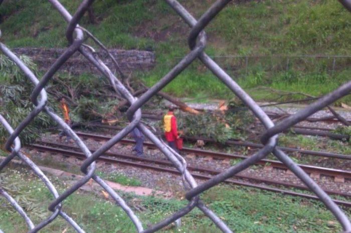A paso de tortuga Línea 1 del Metro de Caracas por árbol caído en vías férreas
