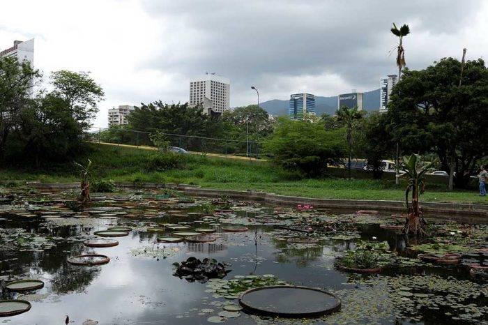 Luz y agua son las principales preocupaciones para recuperar el Jardín Botánico