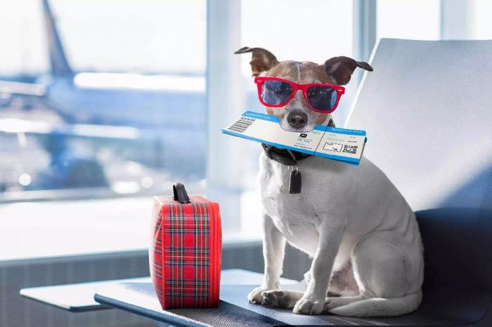 Cómo tramitar el permiso internacional de viaje para mascotas