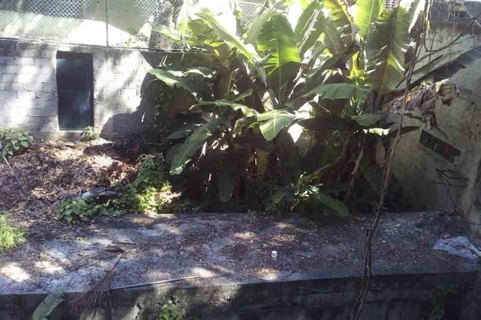Vecinos de Los Dos Caminos se oponen a invasión de quebrada Agua de Maíz