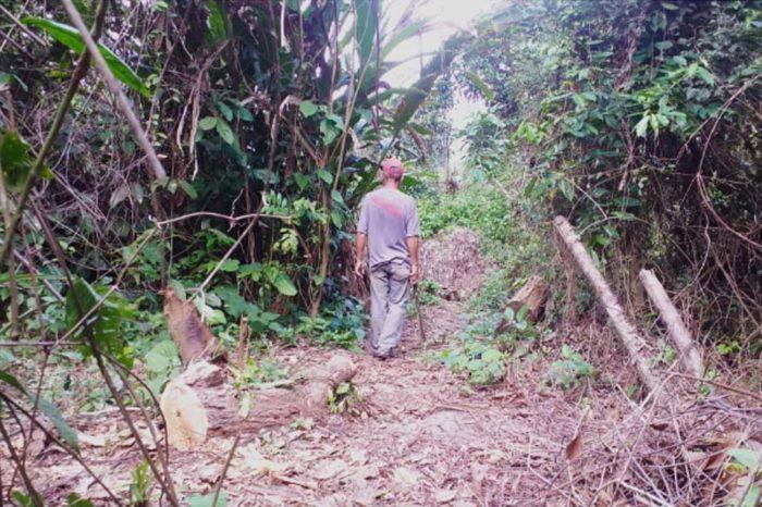Por negocio o por necesidad: grave deforestación a cambio de leña