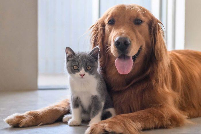 Mascotas en cuarentena: entérate de cómo debes protegerla de la covid-19