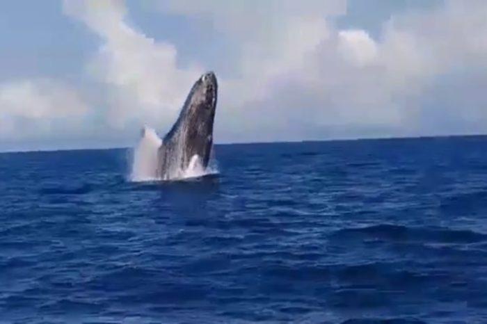 cuarentena ballenas jorobadas Mochima