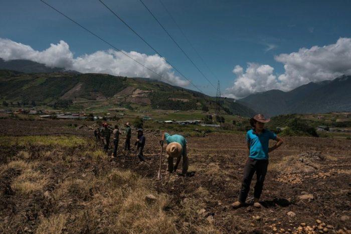 Productores calculan que 600.000 hectáreas están sin cultivar en Barinas