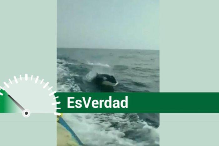 EsPaja | ¿Cuatro orcas fueron avistadas al norte de la isla de Margarita?