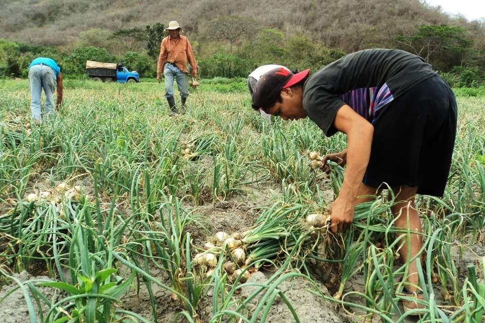 Es tan bajo el consumo en el país que la poca cosecha cubre la demanda