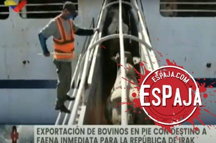 EsPaja   Castro Soteldo: Venezuela tenía 120 años sin exportar ganado vacuno