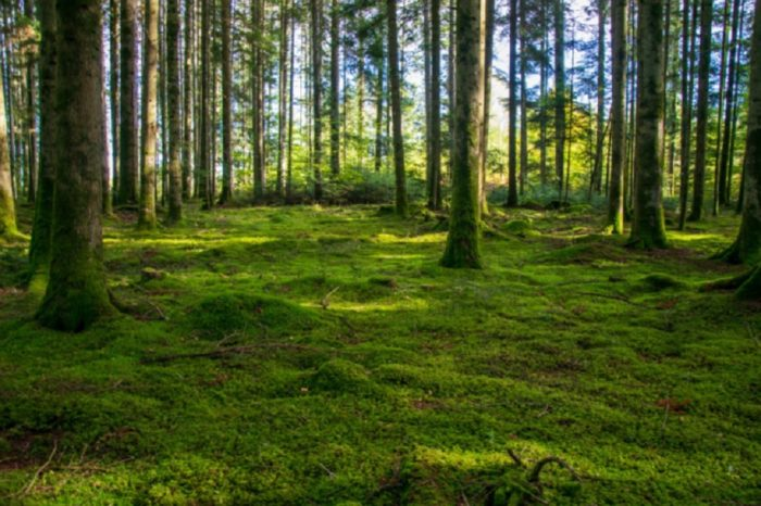 Verdes de tu bosque, por Gustavo J. Villasmil-Prieto