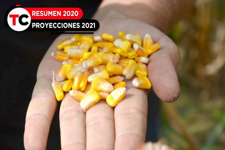 Agro resumen 2020, producción de maíz