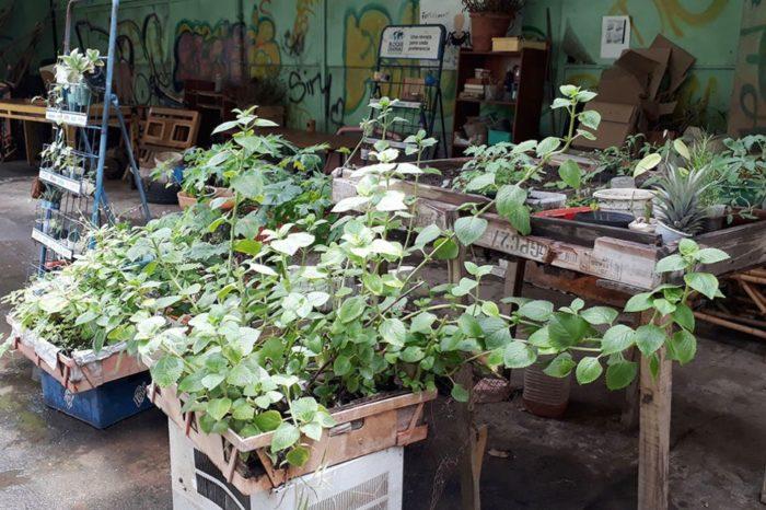 Medicinal plantas intoxicación bolívar