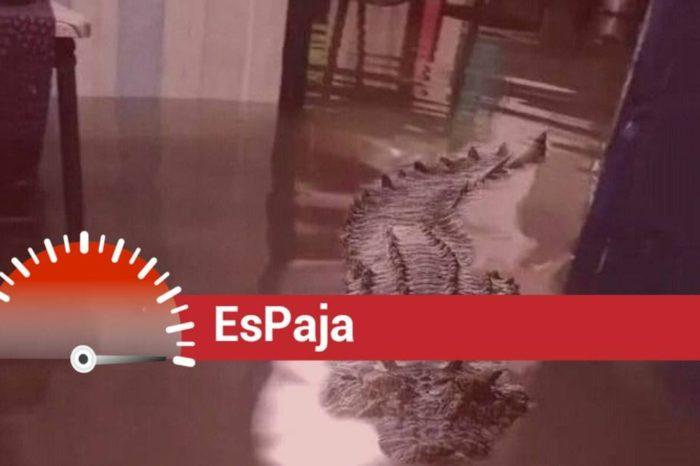EsPaja lluvias venezuela cocodrilo