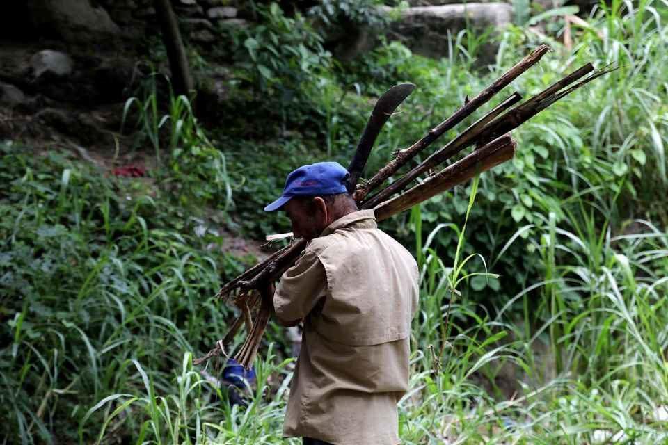 Oro, comida y leña: en lo que se convierten los bosques de Venezuela